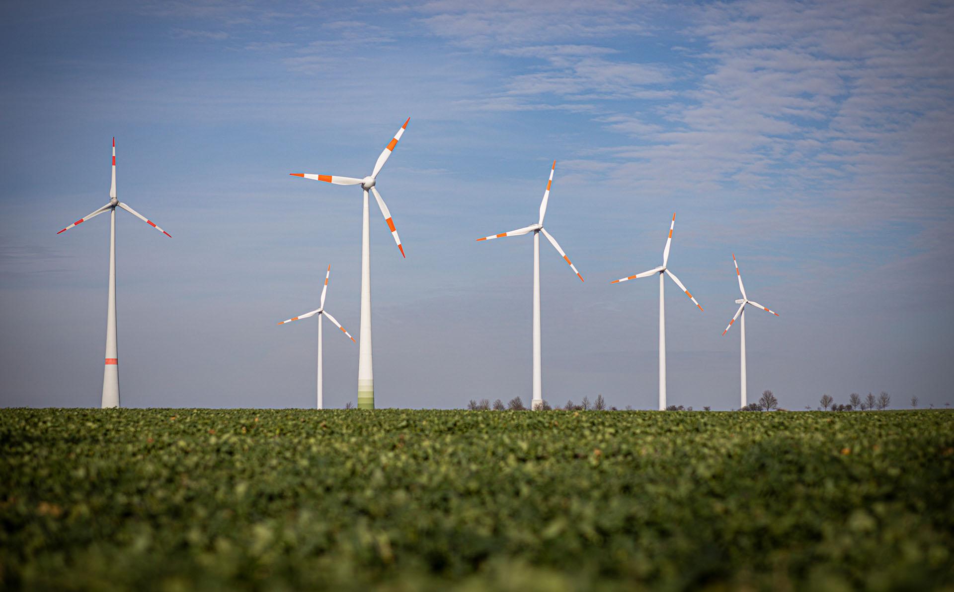 Windkraftanlagen stehen vor blauem Himmel, im Vordergrund ein Kartoffelacker